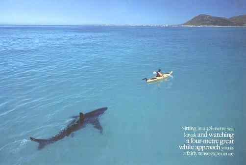 http://www.microplagio.com/imgs/2007/07/shark-kayak.jpg