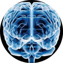 cerebro desarrollado